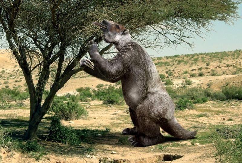Ученые утверждают, что 11 тыс. лет назад люди охотились на огромных ленивцев