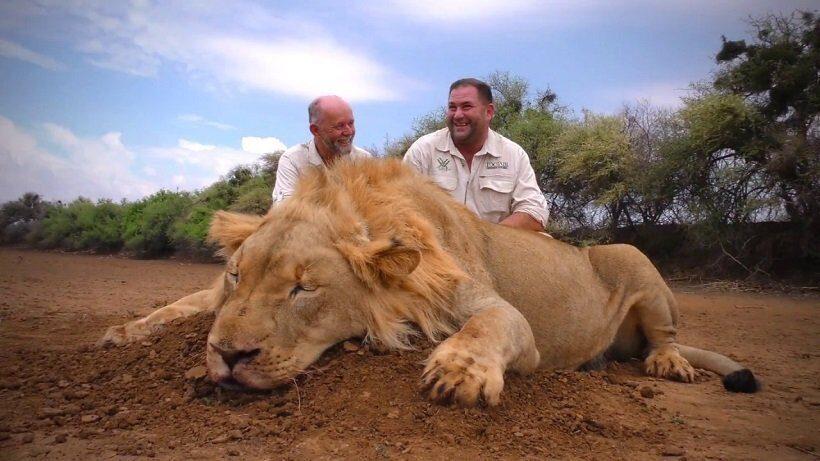 Компания Singapore Airlines запретила перевозки костей льва