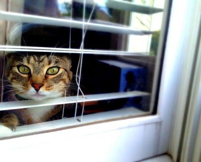 кошки скучают по хозяевам 2