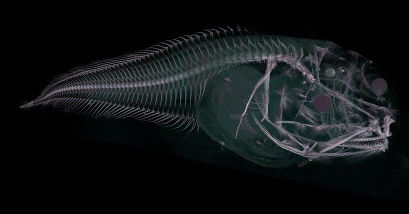 открыт новый вид рыб