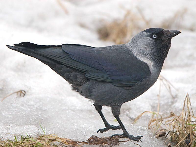 Певчие птицы приморского края фото одно самых