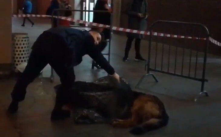 Полицейский застрелил собаку в московском метро