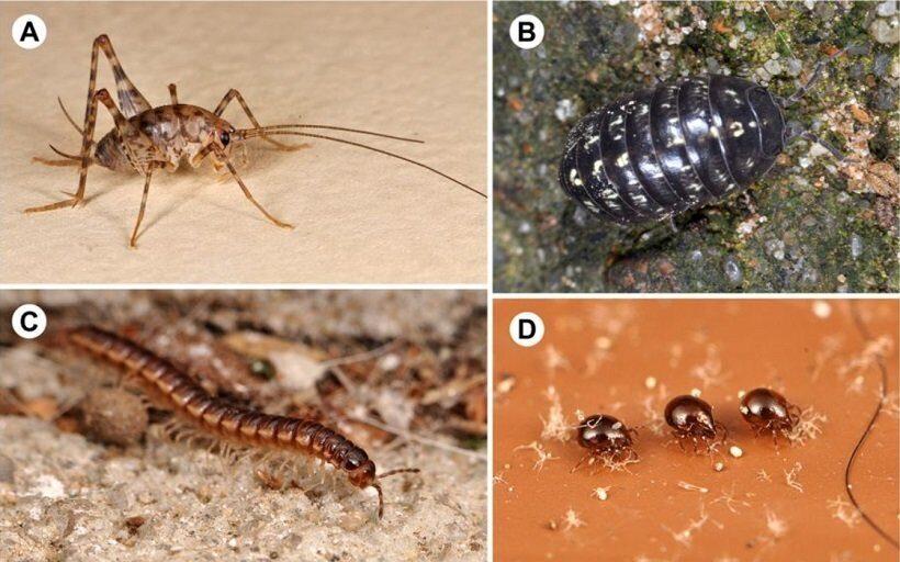 В каждом доме живет по 100 видов насекомых