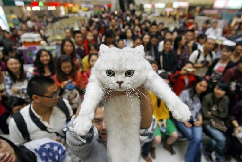 домашние кошки в Китае