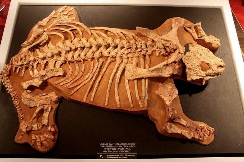 древний ящер парейазавр