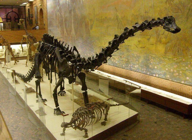 скелет диплодока