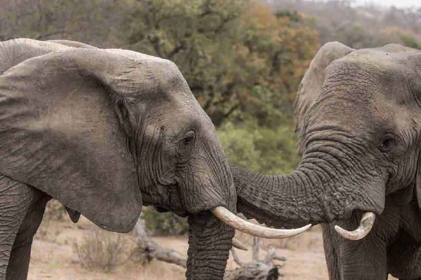 Картинки разговаривающих животных