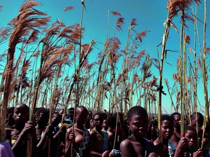 девушки приходят на праздник с заготовленным с утра тростником