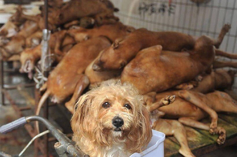 Вскоре в США людям, употребляющим в пищу кошек и собак, может грозить штраф до $5 тыс.