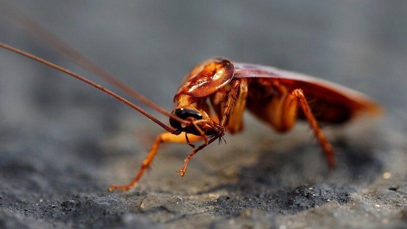 от тараканов тоже есть польза
