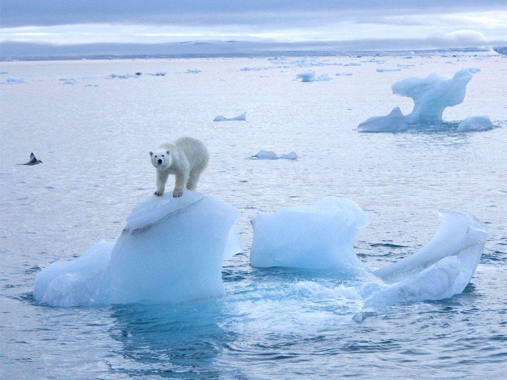 В Антарктиде появилась еще одна гигантская трещина