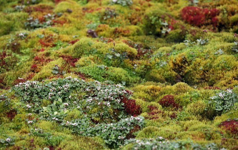 растительный покров в Арктике