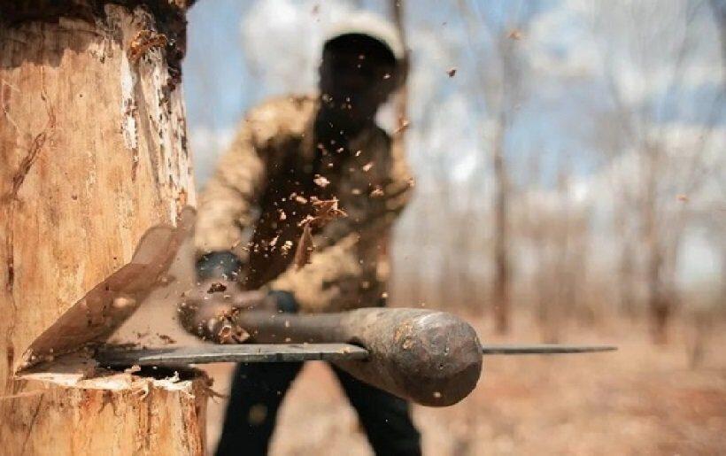 черные лесорубы ущерб