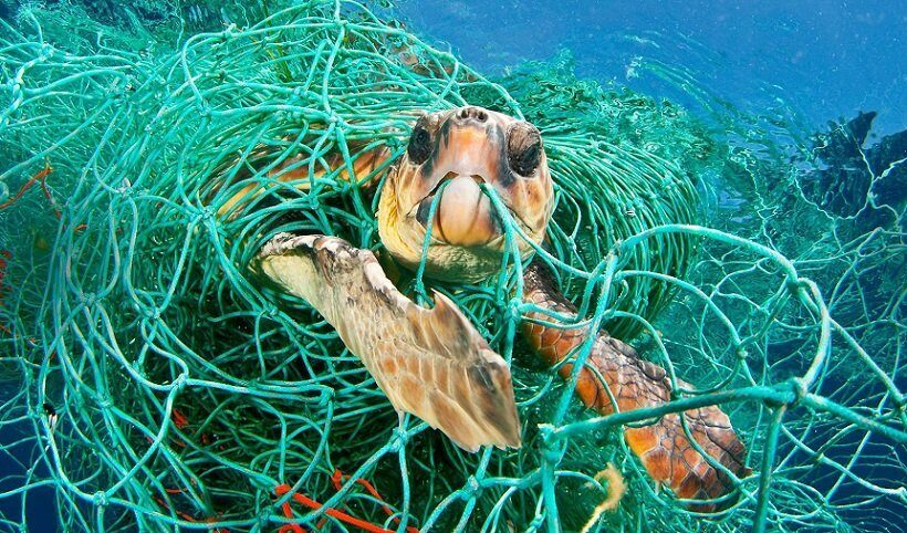 Около 300 морских черепах погибли у побережья Мексики