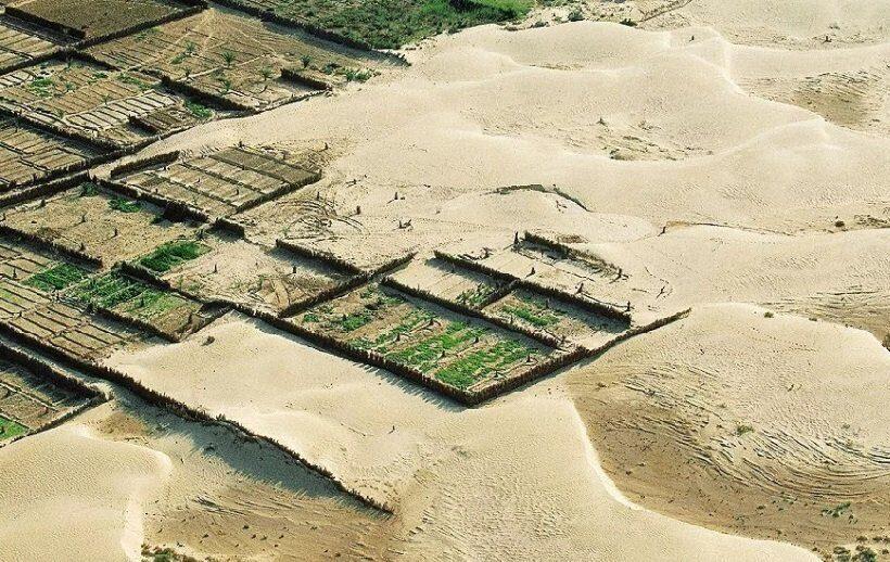 В Китае озеленяют пустынные районы страны при помощи роботов