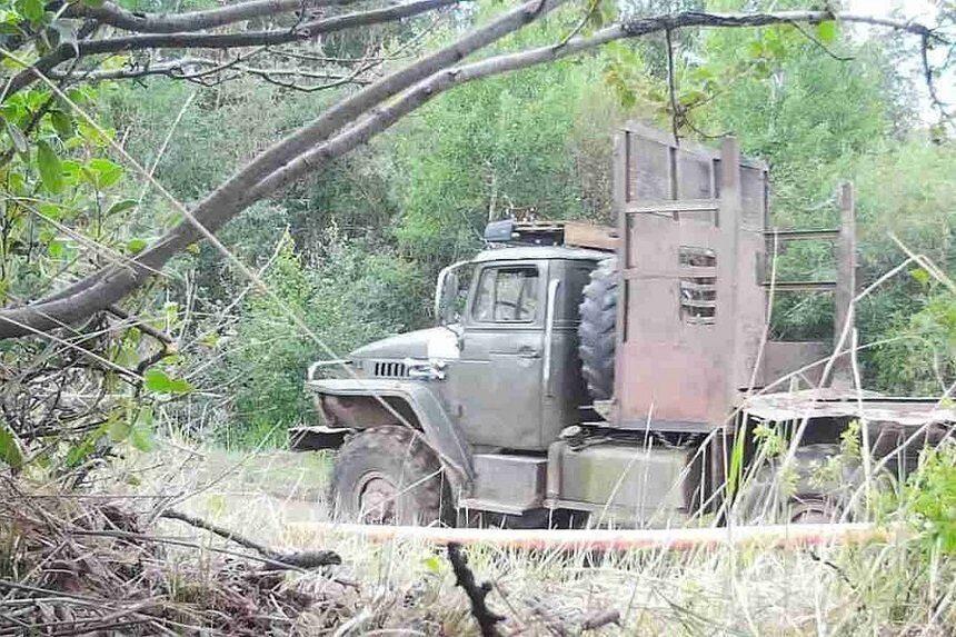 Фотоловушки в лесах Бурятии для черных лесорубов