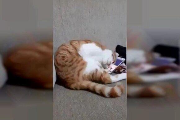 котик скучает по хозяину
