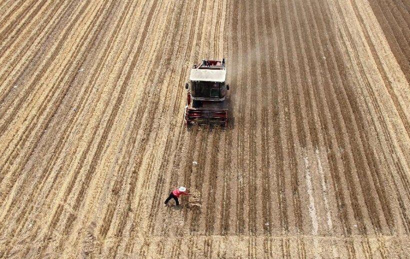 посев пшеницы в Китае