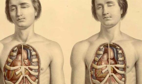 Медики нашли в человеческом теле новый орган