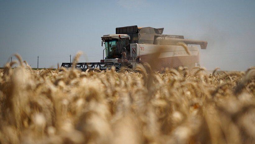 Рекордный урожай пшеницы в России